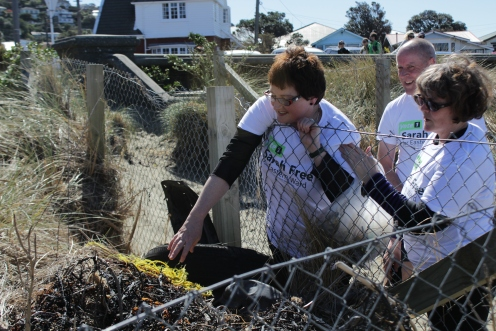 lyall bay beach clean up! 003